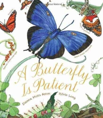 a butterfly book for kids called a butterfly is patient