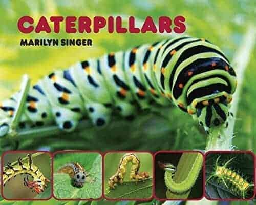 caterpillars that turn into butterflies book