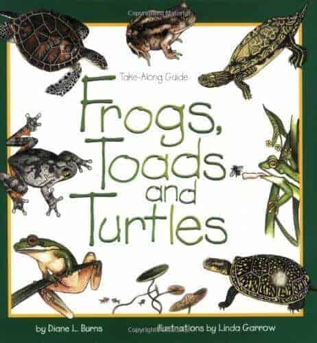 Frogs, toads and turtles kids books