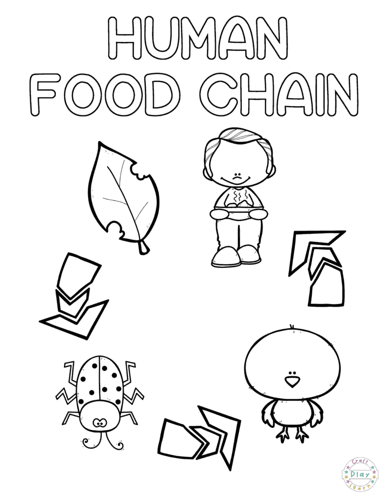 Preschool Coloring Pages Human Food Chain · The Inspiration Edit