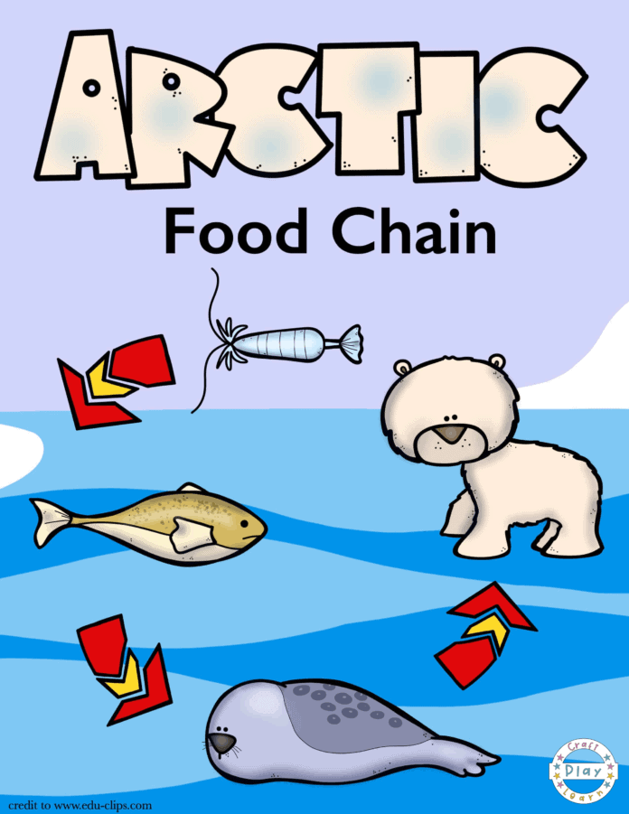 arctic food chain and arctic coloring page for kids